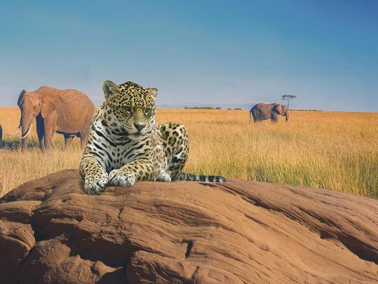 Leopard-Ata Alishahi-Giclee Print