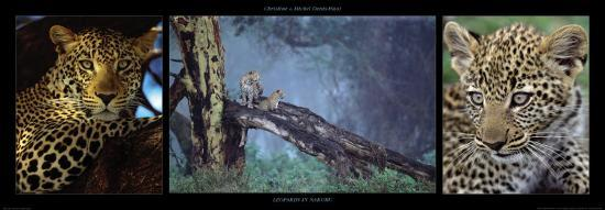 Leopards in Nakuru-Michel & Christine Denis-Huot-Art Print