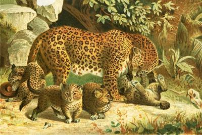 Leopards-English School-Giclee Print