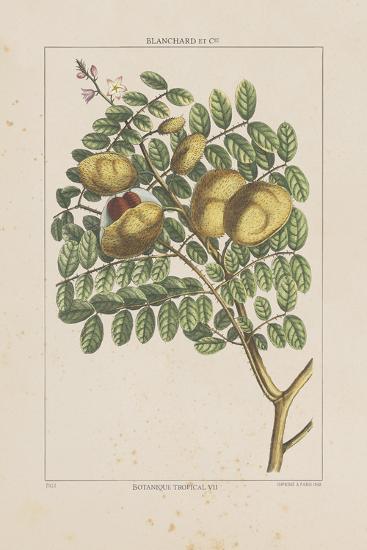 Les Botaniques II-Georg Dionysius Ehret-Giclee Print