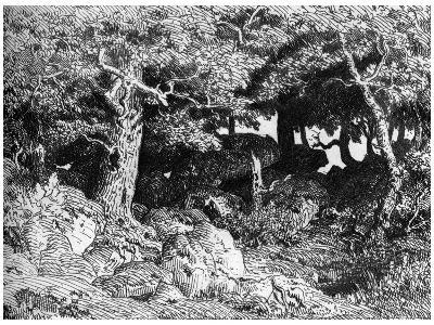 Les Chenes De Roche, C1832- 1860-Theodore Rousseau-Giclee Print