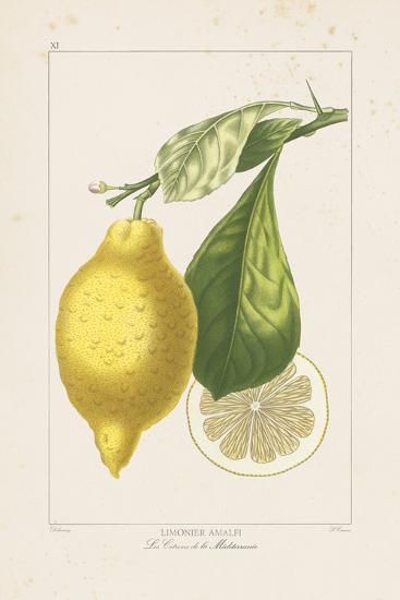 Les Citrons II-A^ Poiteau-Giclee Print