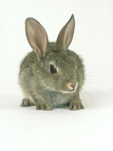 Rabbit, Aylesbury, UK by Les Stocker