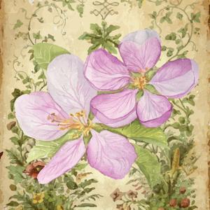 Vintage Apple Blossom I by Leslie Mark