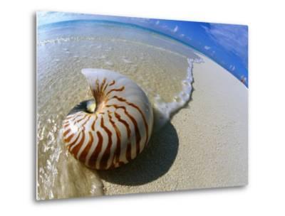 Seashell Resting on Shore