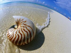 Seashell Resting on Shore by Leslie Richard Jacobs