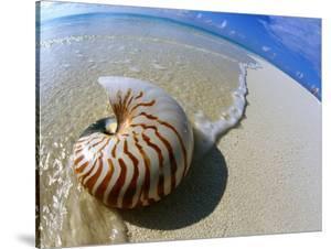 Seashell Resting on Shore by Leslie Richard Jacobs