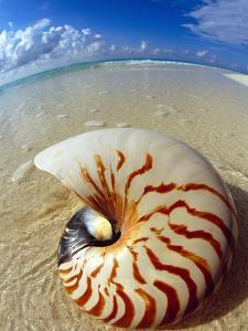 Seashell Sitting in Shallow Water by Leslie Richard Jacobs