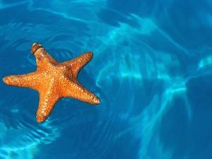 Starfish Floating on the Surface of the Ocean by Leslie Richard Jacobs