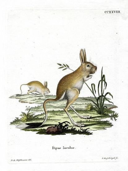 Lesser Egyptian Jerboa--Giclee Print