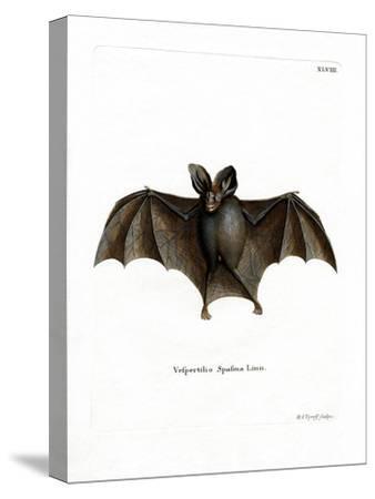 Lesser False Vampire Bat