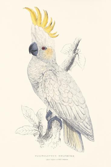 Lesser Sulphur-Crested Cockatoo-Edward Lear-Premium Giclee Print