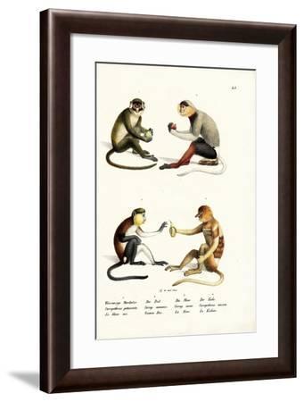 Lesser White-Nosed Monkey, 1824-Karl Joseph Brodtmann-Framed Giclee Print