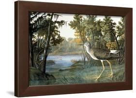Lesser Yellowlegs-John James Audubon-Framed Giclee Print