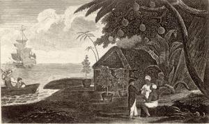 Bread Fruit Taken onto H.M.S. Bounty by Captain Bligh by Lester