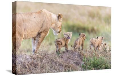 Let's Go Mom-Ted Taylor-Stretched Canvas Print