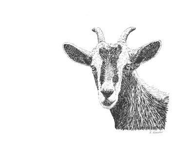 Z10 Goat