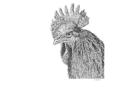 Z20 Rooster