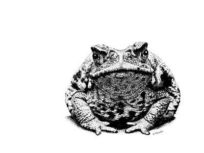 Z21 Toad