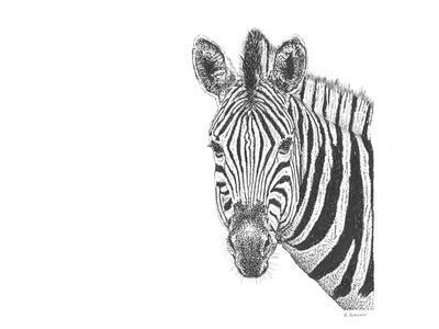 Z22 Zebra