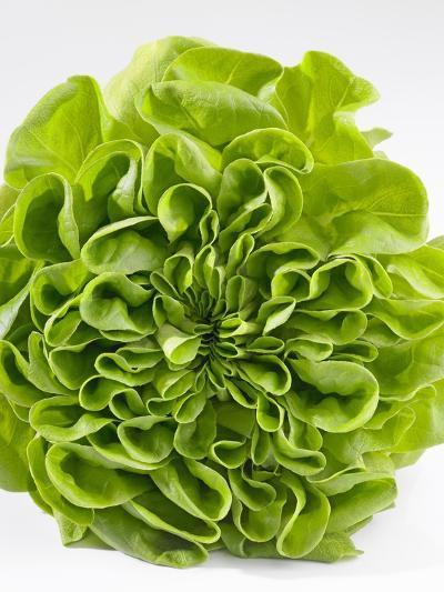 Lettuce-Barbara Lutterbeck-Photographic Print