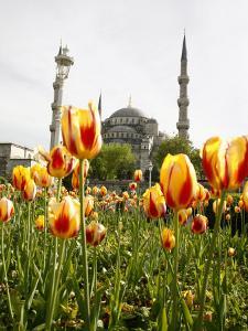 Blue Mosque, Istanbul, Turkey, Europe by Levy Yadid