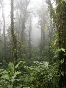 Rainforest, Santa Elena Cloud Forest Reserve, Costa Rica, Central America by Levy Yadid