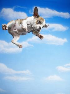 Flying Bulldog Puppy by Lew Robertson