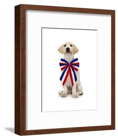 Lab Puppy Wearing Patriotic Bow Tie