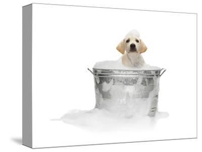 Puppy Taking Bath