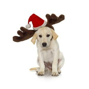 Puppy with Santa Hat and Reindeer Ears by Lew Robertson
