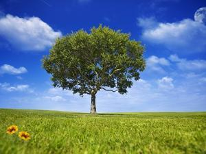 Tree Against Blue Sky by Lew Robertson