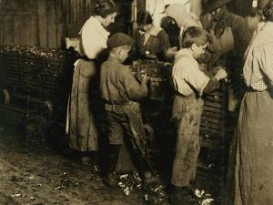 10 Year Old Jimmie Who Has Been Shucking 3 Years with an 11 Year Old Boy Who Shucks 7 Pots by Lewis Wickes Hine