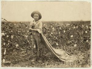 6-Year Old Warren Frakes with About 20 Pounds of Cotton in His Bag at Comanche County by Lewis Wickes Hine