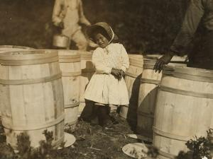 Mary Christmas, Only 3, Made to Pick Cranberries Spilt at the Barrels by Her Grandfather by Lewis Wickes Hine