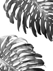 Double Philodendron (BW) by Lexie Greer
