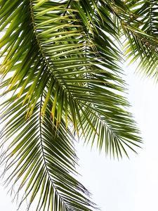 Palm Leaves by Lexie Greer