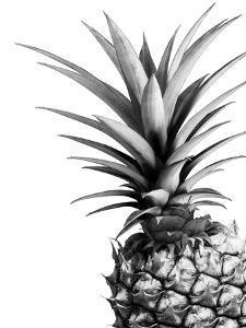 Pineapple (BW) by Lexie Greer