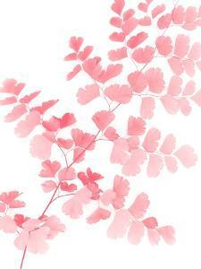Pink Maidenhair by Lexie Greer