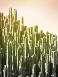 Pink Sky Cactus by Lexie Greer