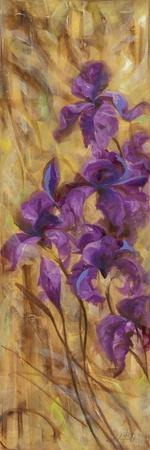 Bearded Iris VII
