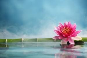 Bamboo and Water Lily Reflected in a Serenity Pool by Liang Zhang