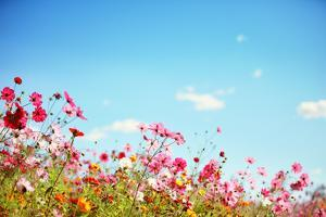 Daisy Flower against Blue Sky,Shallow Dof. by Liang Zhang
