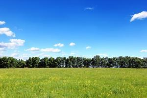Green Field and Trees at Sunny Day by Liang Zhang
