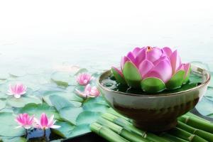 Spa Still Life with Lotus for Body Treatment by Liang Zhang