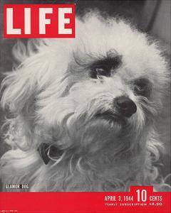 LIFE Glamour Dog Pooch 1944