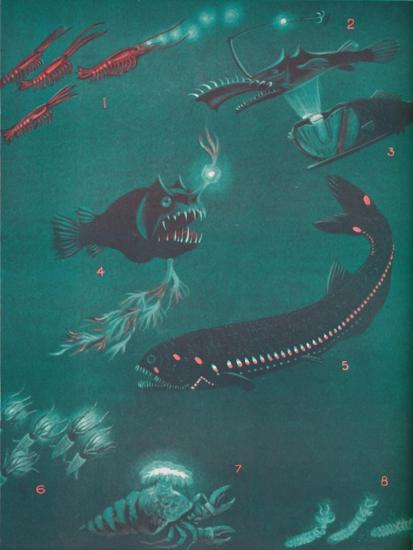 'Life Half a Mile Below The Sea's Surface', 1935-Unknown-Giclee Print