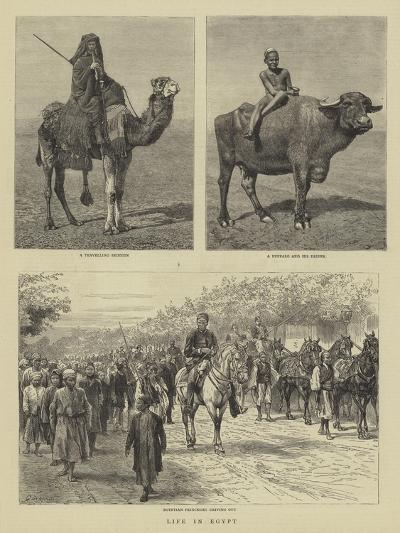 Life in Egypt-Godefroy Durand-Giclee Print