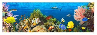 Life in the Coral Reef, Maldives-Pangea Images-Giclee Print
