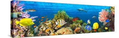 Life in the Coral Reef, Maldives-Pangea Images-Stretched Canvas Print
